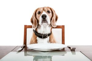 Ward off obesity in pets